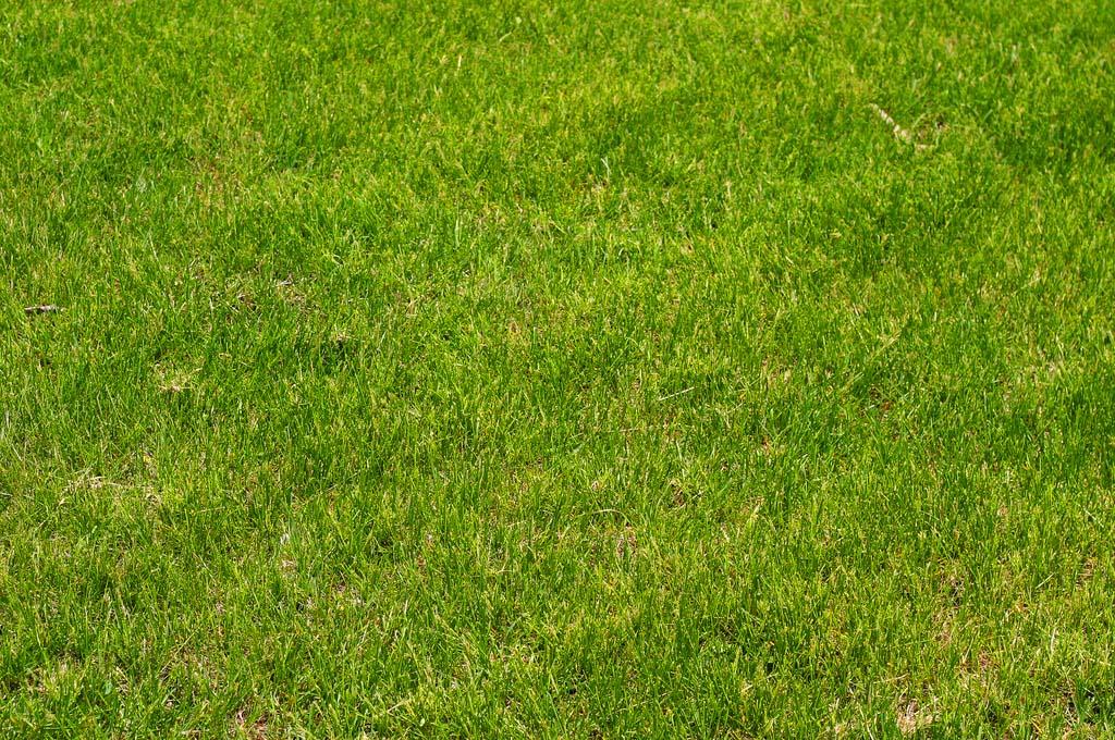 Un jardin facile entretenir avec du gazon synth tique for Jardin facile a entretenir